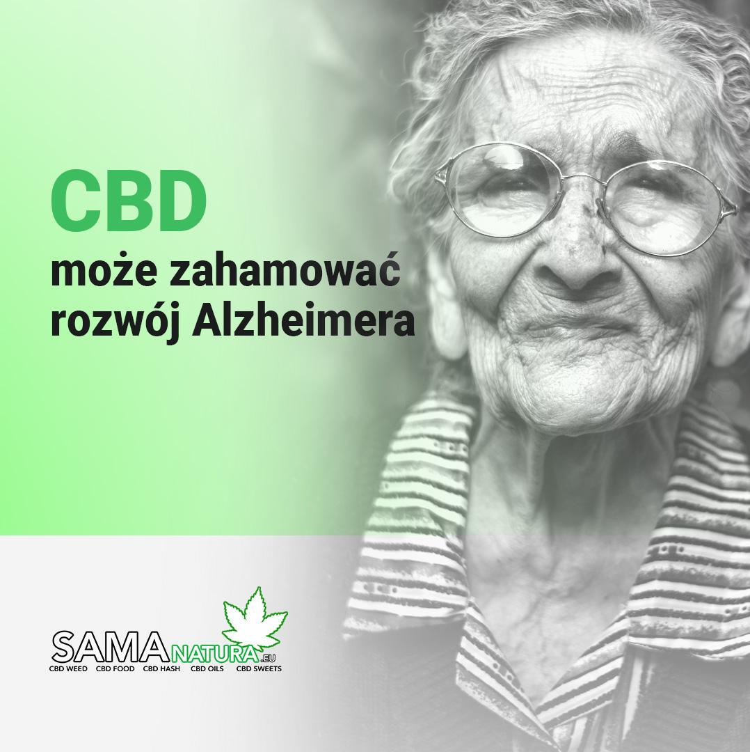 CBD może zahamować rozwój Alzheimera